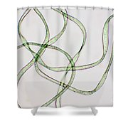 Dacron Fibers Shower Curtain