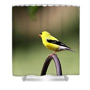 Daddy Gold Shower Curtain