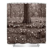 Daffodil Glade Number 2 Bw Shower Curtain