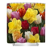 Daffodil Narcissus Sp Lucky Number Shower Curtain