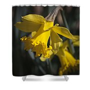 Daffodil Squared Shower Curtain