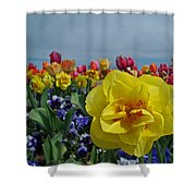 Daffodil Up Front Shower Curtain