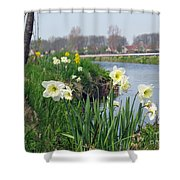 Daffodils In Holland 01 Shower Curtain