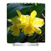 Daffodils In The Wild Shower Curtain