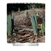 Daffodils Narcissus Shower Curtain
