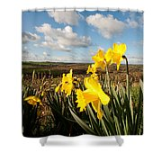 Daffs On Dartmoor Shower Curtain