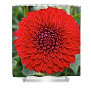 Dahlia 4001 Shower Curtain