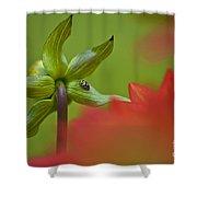 Dahlia Bud Back Side Shower Curtain