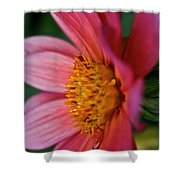 Dahlia Candles Shower Curtain