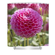 Dahlia Dahlia Sp Lindas Baby Variety Shower Curtain
