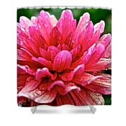 Dahlia Dew Drops Shower Curtain