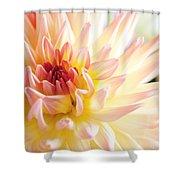 Dahlia Flower 01 Shower Curtain
