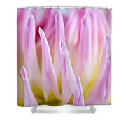 Dahlia Flower 12 Shower Curtain