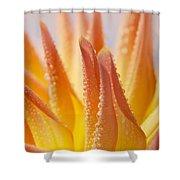 Dahlia Flower 14 Shower Curtain