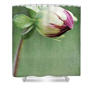 Dahlia Flower 2 Shower Curtain