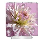 Dahlia Flower Pretty In Pink Shower Curtain