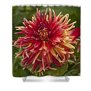 Dahlia In Its Prime Shower Curtain