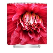 Dahlia In Red Shower Curtain