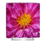 Dahlia Named Pink Bells Shower Curtain