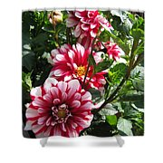 Dahlia Named Yoro Kobi Shower Curtain