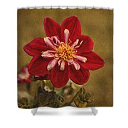 Dahlia Shower Curtain by Sandy Keeton