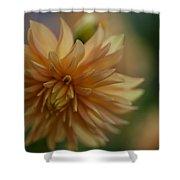 Dahlias Pastel Shower Curtain