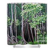 Daintree Forest At Twilight Shower Curtain