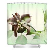 Dainty Shower Curtain