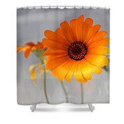 Daisies 4 Shower Curtain