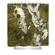 Daisies Blowin In The Wind Shower Curtain