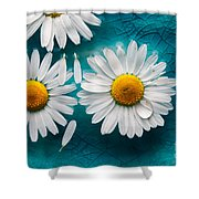 Daisies Floating In Water Shower Curtain
