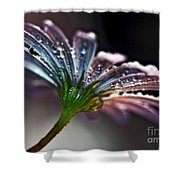 Daisy Abstract With Droplets Shower Curtain