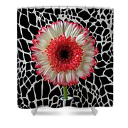 Daisy And Graphic Vase Shower Curtain