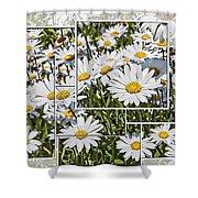 Daisy Days Shower Curtain