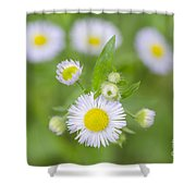 Daisy Flowers Shower Curtain