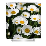 Daisy In A Field Shower Curtain