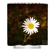Daisy Is Single But Not Lonely  Shower Curtain