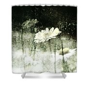 Daisy Love Shower Curtain