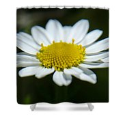 Daisy On Green Shower Curtain