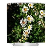 Daisy Production Line Shower Curtain