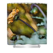 Daisy With Curls Shower Curtain