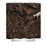 Dall Sheep Were Is Very Adapt Shower Curtain