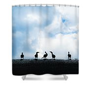 Dam Ducks Shower Curtain