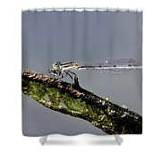 Damsel With Lunch Shower Curtain