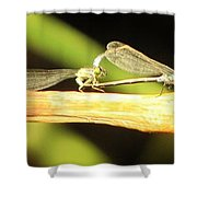 Damselflies In Nature Shower Curtain