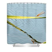 Damselfly Reflection Shower Curtain