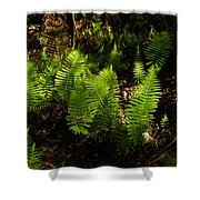 Dancing Ladys Shower Curtain