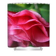 Dancing Petals Of The Camellia Shower Curtain