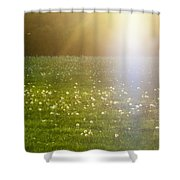 Dandelion And Meadows In Back-light Shower Curtain