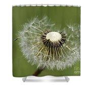 Dandelion Half Gone Shower Curtain
